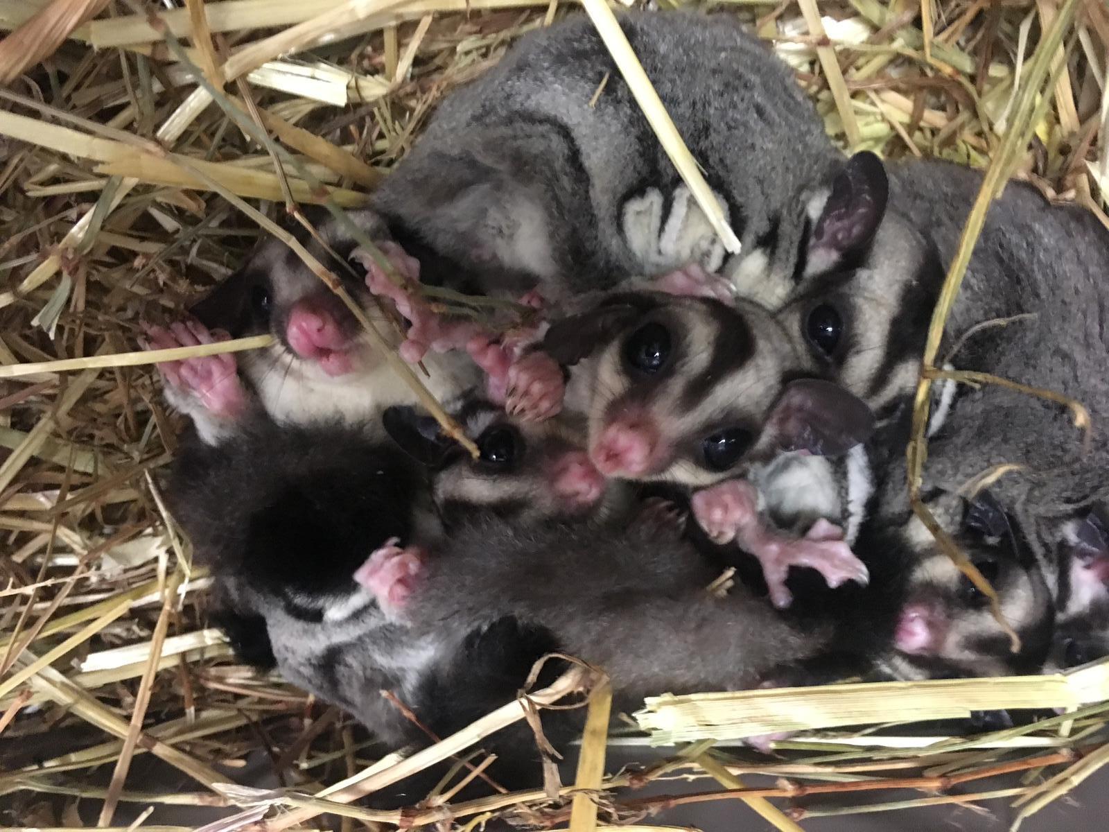 http://animalsholding.cz/produkty_fotogalerie/1552649076L.jpg