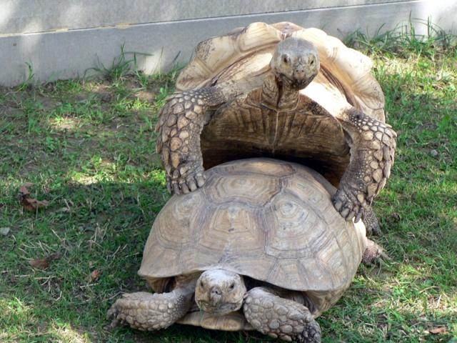 http://animalsholding.cz/produkty_fotogalerie/pareni.jpg