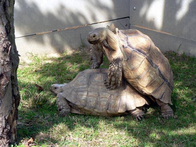 http://animalsholding.cz/produkty_fotogalerie/pareni_2.jpg
