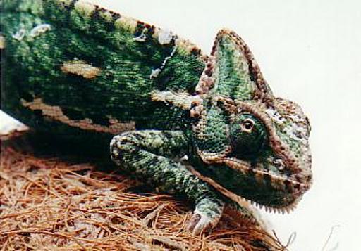 http://animalsholding.cz/produkty_fotogalerie/scan10032.jpg