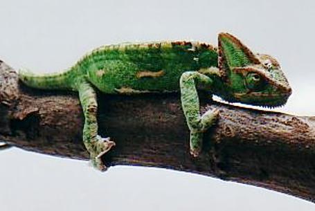 http://animalsholding.cz/produkty_fotogalerie/scan10033.jpg