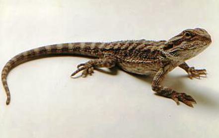 http://animalsholding.cz/produkty_fotogalerie/scan10040.jpg