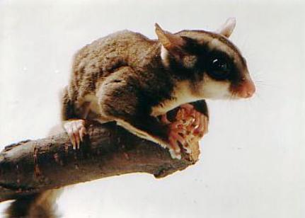 http://animalsholding.cz/produkty_fotogalerie/scan10046.jpg